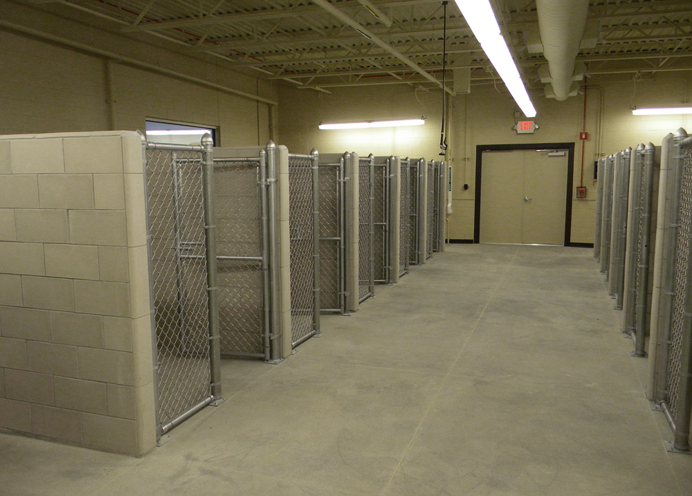 Dog Boarding Kennels In Ft Collins Co